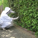 Brighton wasp control and removal service.