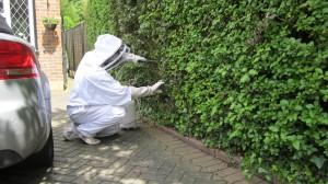 Horsham wasp control team