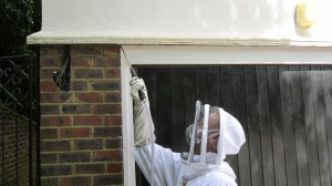 safely performing a wasp nest removal in Horsham